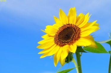 ワキガと季節の関係性!夏と冬は特に要注意